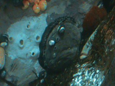 Aquarium of the Bay (64)