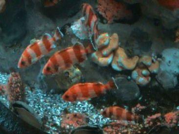 Aquarium of the Bay (65)