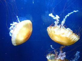 Aquarium of the Bay (69)