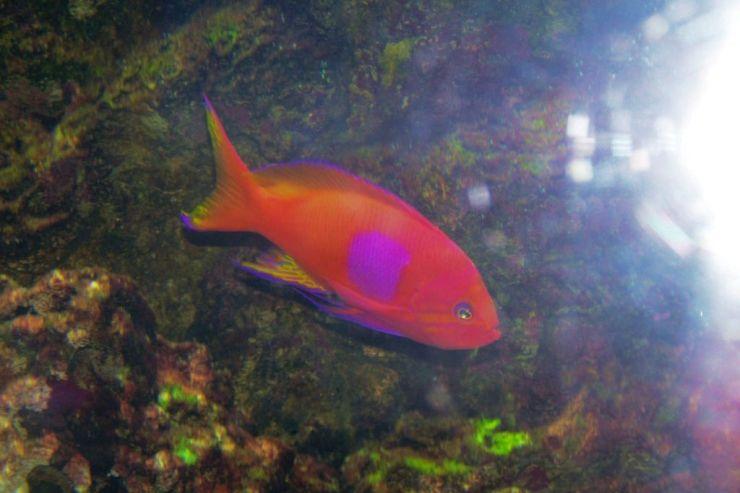 Aquarium of the Bay (8)