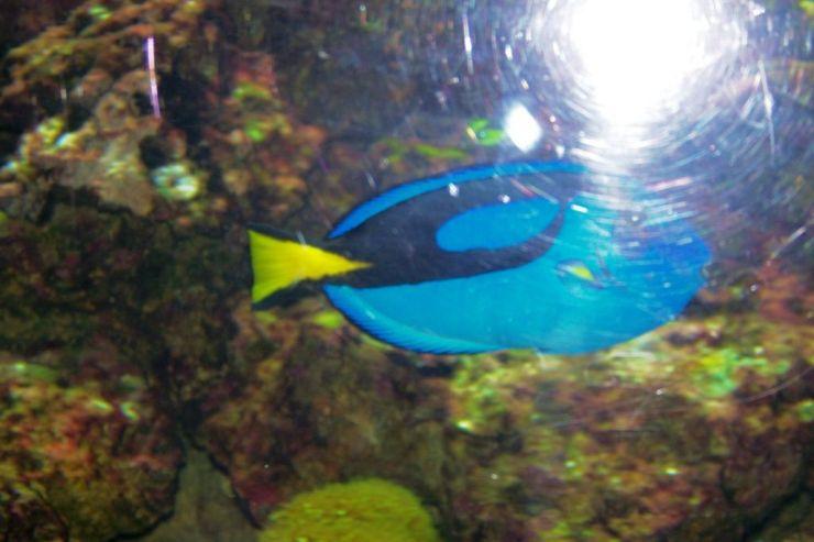 Aquarium of the Bay (9)