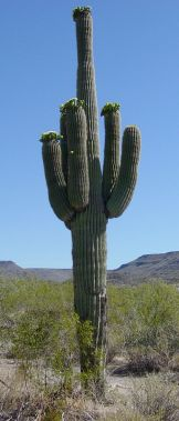 Arizona desert (10)