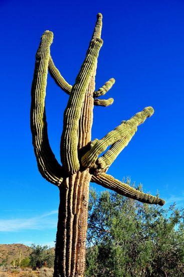 Arizona desert (13)