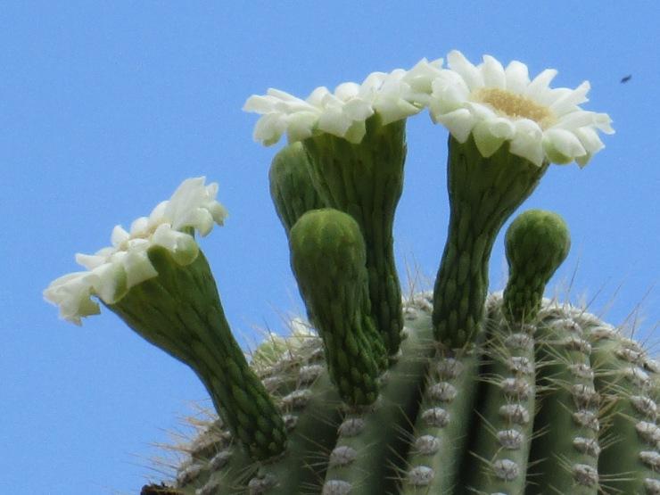 Arizona desert (14)