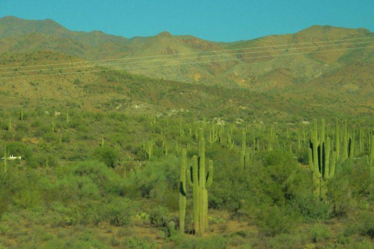 Arizona desert (3)