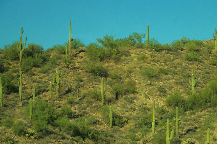 Arizona desert (4)