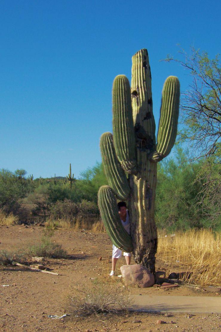 Arizona desert (5)