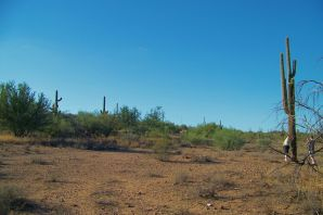 Arizona desert (7)