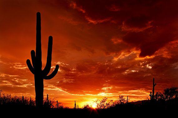 Arizona desert (9)