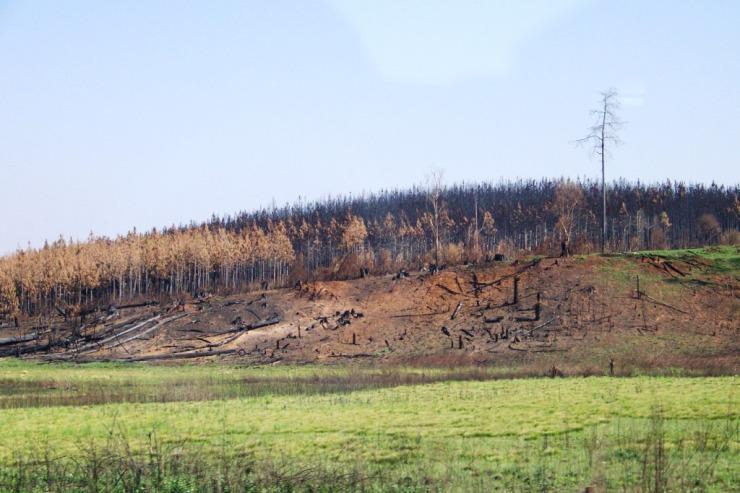 Blyde River NP 01 (restanten van bosbranden)