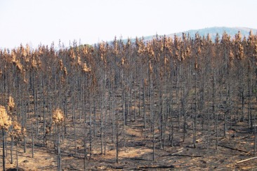Blyde River NP 03 (restanten van bosbranden)