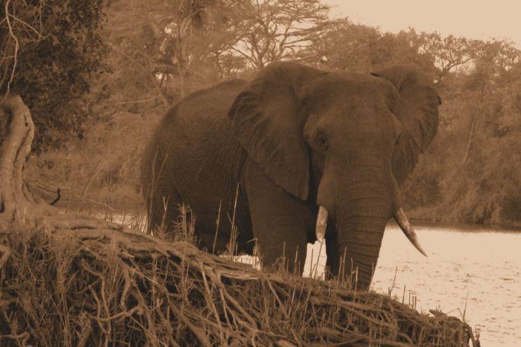 Boottocht op Zambezi (11)