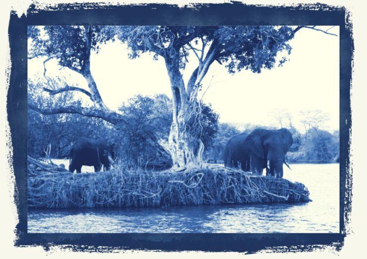 Boottocht op Zambezi (12)