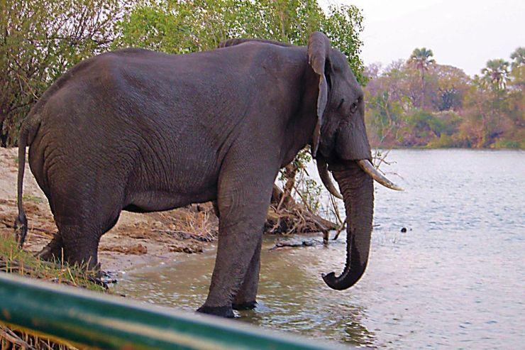 Boottocht op Zambezi (13)