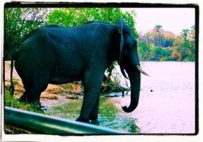 Boottocht op Zambezi (14)
