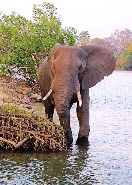 Boottocht op Zambezi (15)
