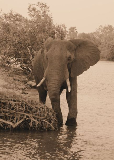 Boottocht op Zambezi (16)
