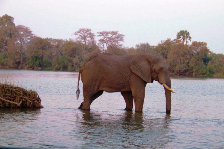 Boottocht op Zambezi (17)