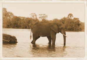 Boottocht op Zambezi (18)