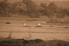 Boottocht op Zambezi (3)