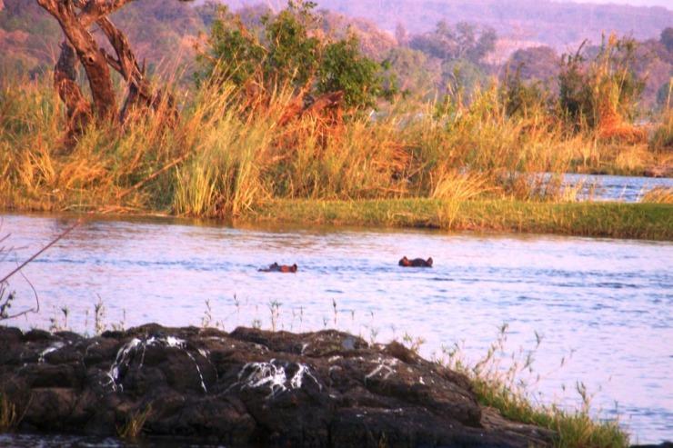 Boottocht op Zambezi (4)