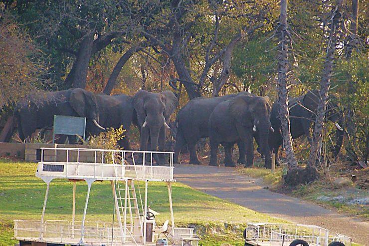 Boottocht op Zambezi (5)
