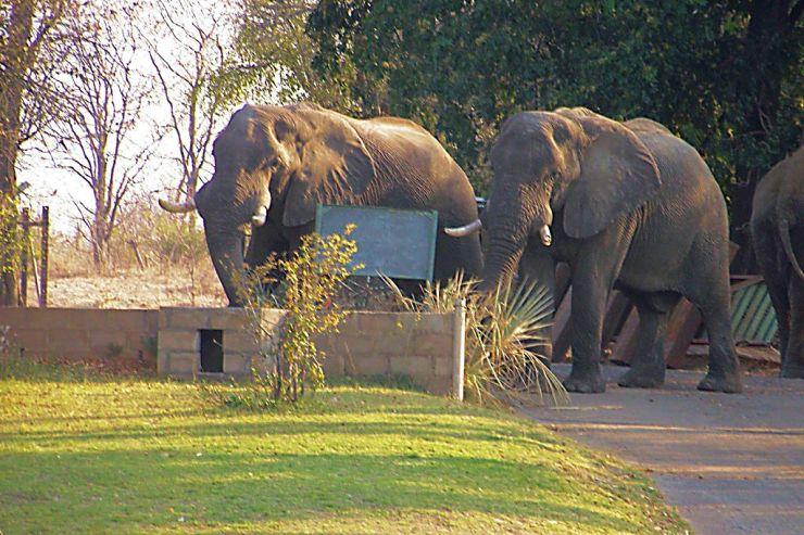 Boottocht op Zambezi (6)