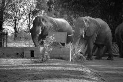 Boottocht op Zambezi (7)