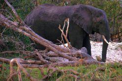 Boottocht op Zambezi (8)