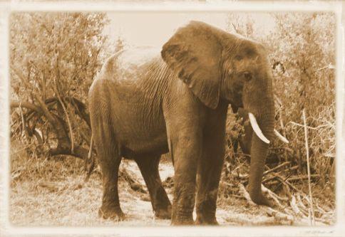 Boottocht op Zambezi (9)