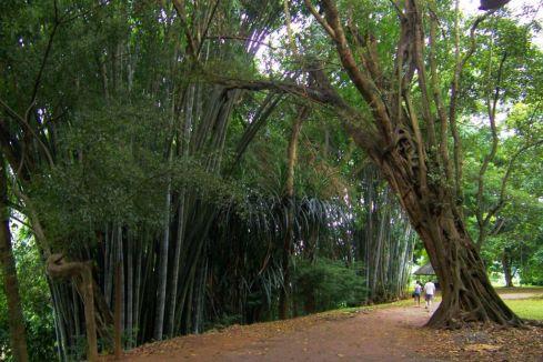 Botanische tuin (13)