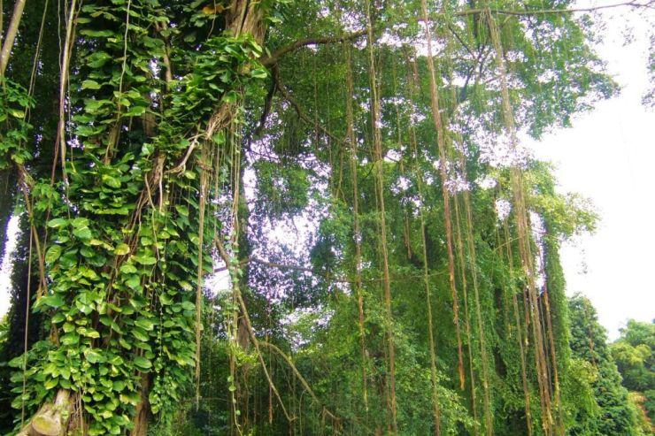 Botanische tuin (14)