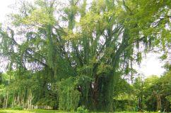 Botanische tuin (15)