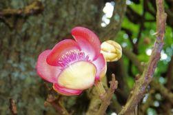 Botanische tuin (17)