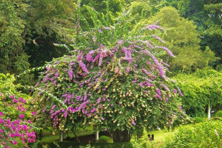 Botanische tuin (22)