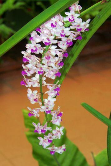 Botanische tuin (26)
