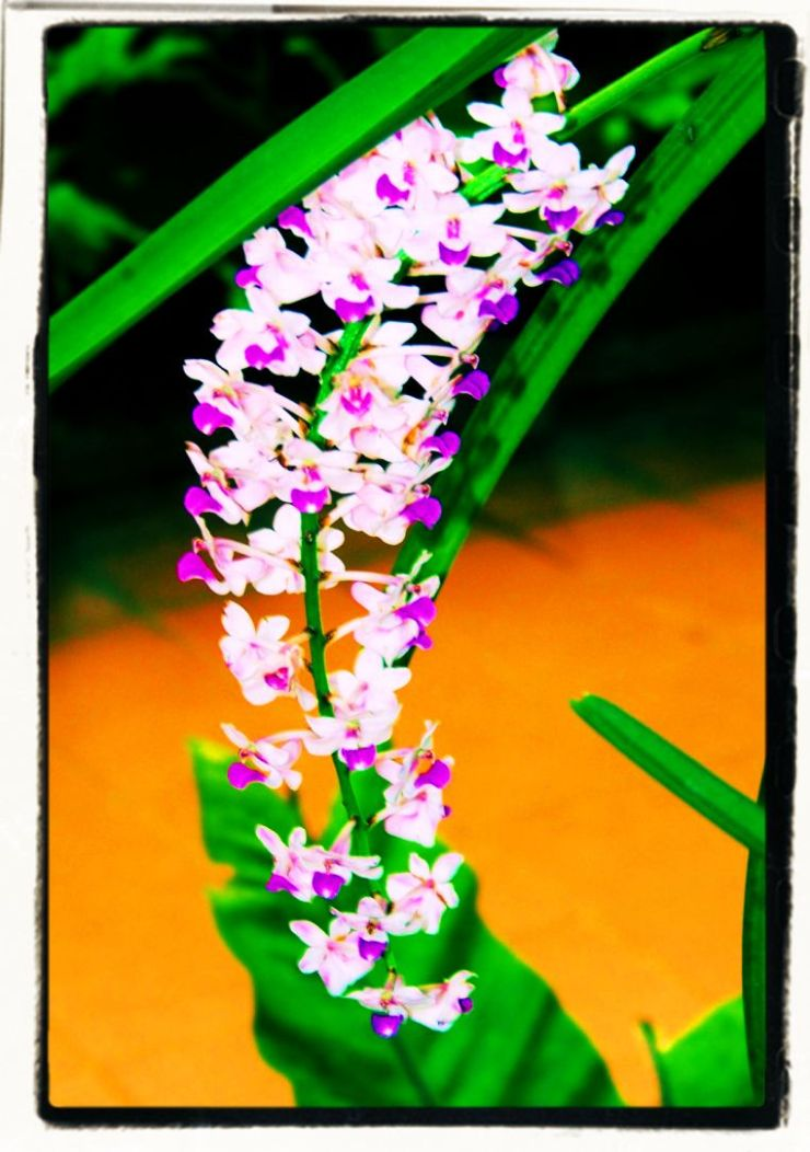 Botanische tuin (27)