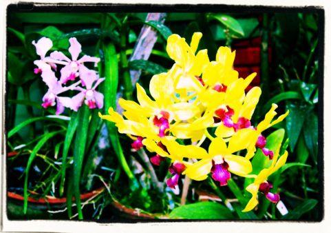 Botanische tuin (28)