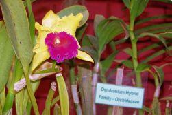 Botanische tuin (29)