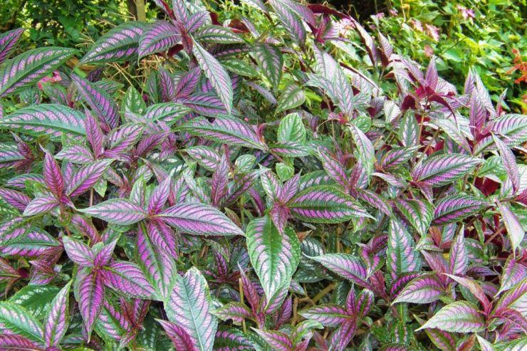 Botanische tuin (32)