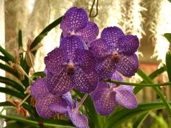 Botanische tuin (35)