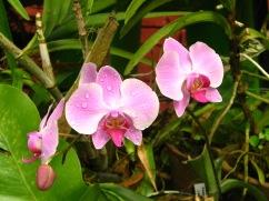 Botanische tuin (36)