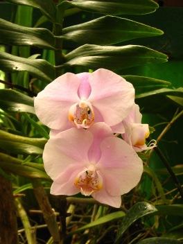 Botanische tuin (38)