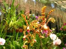Botanische tuin (39)
