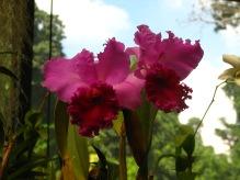Botanische tuin (40)