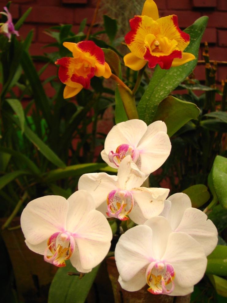 Botanische tuin (41)