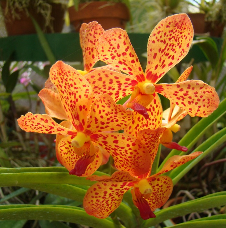 Botanische tuin (42)