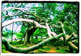 Botanische tuin (5)