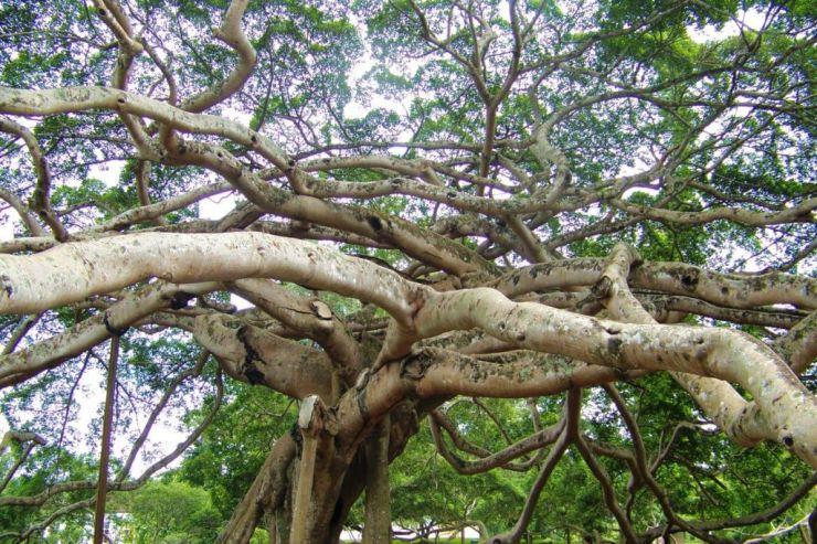 Botanische tuin (6)