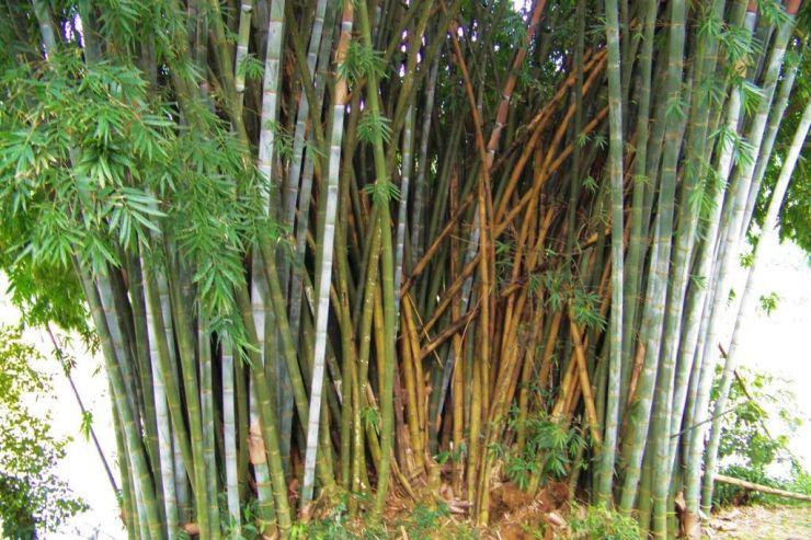 Botanische tuin (8)